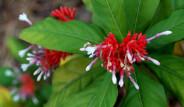Dünyanın En Zehirli Bitkileri