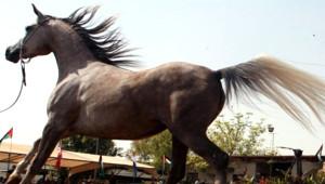At Güzellik Yarışması