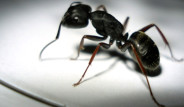 Karıncaların İnanılmaz Sırrı