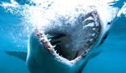 Köpek Balığı Sörfçüye Saldırdı