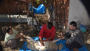 Koyunlarını Bile CHP'li Yaptı