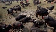 Nepal'de Dehşete Düşüren Festival