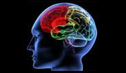 Beyin Yaşınızı Hesaplamak İster Misiniz?