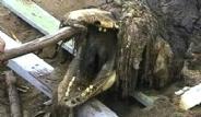 Rusya'da Karaya Vuran Yaratık Dehşete Düşürdü