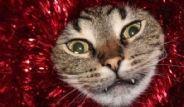 Hayvanların Yeni Yıl Sendromu