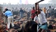 Nepal'de Kanlı Festival Başladı
