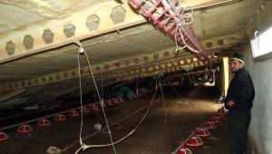 Akyazı'da Küme Çöktü; 8 Bin Piliç Telef Oldu