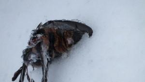 Ağaçlara Sığınan Kuşlar Donarak Öldü