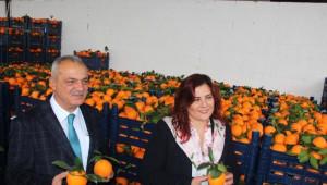 Elde Kalan Portakalları Başkan Aldı, Çiftçi Bayram Yaptı