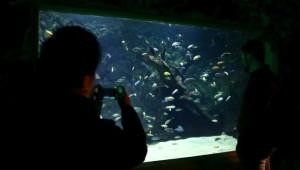 İstanbul Sea Life Akvaryumu'nun Açılışı Gerçekleşti