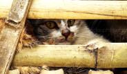 Vietnam'da Bir Adam İki Bin Kediyi Kesmek İçin Kaçırdı