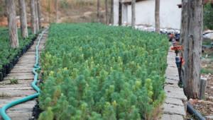 Orman İşletmeden Yatağan'a 4,5 Milyon Lira