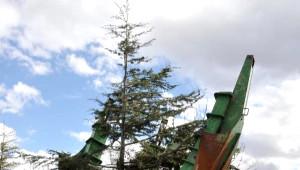 Eğirdir'de Sökülen Ağaçlar Başka Yere Dikildi