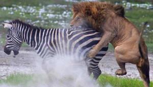 Vahşi Doğadan Heyecan Dolu Anlar