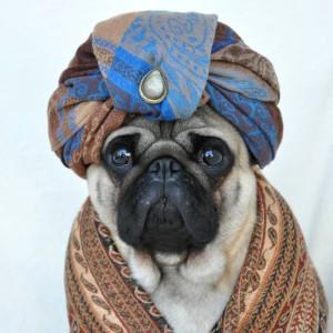 Karşınızda Instagram'ın En Stil Sahibi Köpeği: Nutello