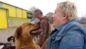 Hayvanseverler Ormana Terkedilen Köpeklere Yiyecek Taşıyor