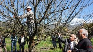 Ula'da Ağaç Budama Kursu