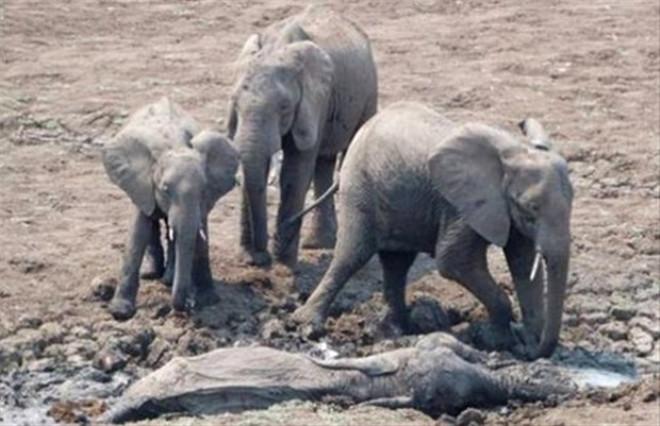 Fil Ve Timsahın ölüm Kalım Savaşı Foto Galerisi