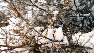 Posof'ta Kar Yağışı Etkili Oldu