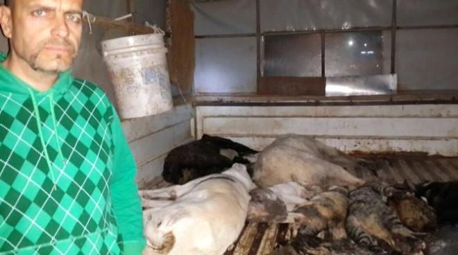 Urla'da Yine Kedi ve Köpek Katliamı