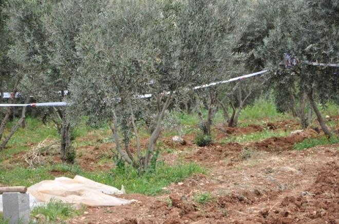 Zeytin Bahçesinde Patlayıcı Madde Bulundu