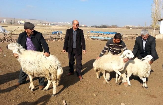 Çorum Damızlık Koyun Keçi Birliğine Yeni Hizmet Binasında
