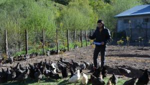 Suşehri'nde Organik Köy Yumurtası Çiftliği Kuruldu