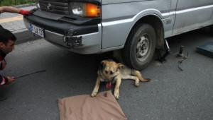 Aracın Altında Sıkışan ve 30 Metre Sürüklenen Köpeği, İtfaiye Kurtardı