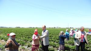 Ayvalık'ta Dünya Çiftçiler Gününü Tarlada Kutlandı