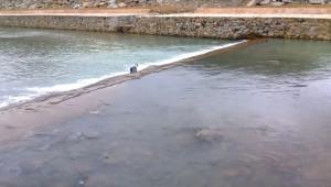 Karadenizli Genç Mahsur Kalan Kuzuyu Böyle Kurtardı