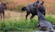 Hayvanlar Dünyasından İnanılmaz Anlar