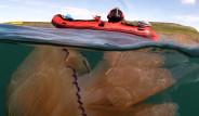 Dev Deniz Anasını Görenler Şaşkına Dönüyor