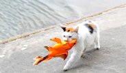 Kedi, Balığı Denizde Avladı