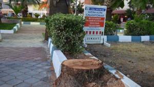 Dikili'de Belediyenin Parktaki 5 Ağacı Kesmesine Tepki