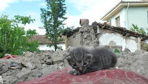 Ev Yandı, Yaşlı Çift ve Yavru Kedileri Kurtarıldı