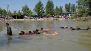 Koyunlar Suya 'Temiz Çevre' İçin Atlayacak