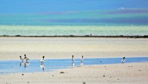 Çetiner: Seyfe Gölü'nün Kurtuluşu İçin Radikal Kararların Alınması Gerekiyor