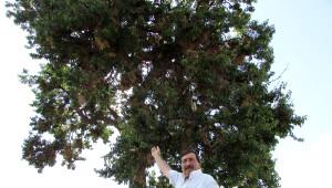 Saklı Kuş Cenneti' Gibi Ağaç