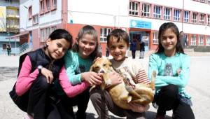 Arkadaşlarıyla Yaralı Bulup, Tedavi Ettirdiği Köpeği Sahiplendi