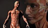 Vücudumuzun 24 Saatlik Evresi