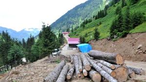 Trees Cut İn Turkey's Northeast Highlands Despite Court Ruling