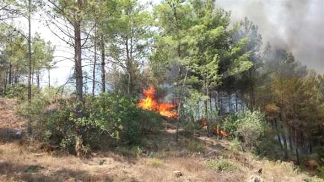 Mersin'de Kızılçam Ormanında Yangın