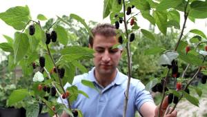Avustralya Karadutu Erzurum'da Yetiştiriliyor