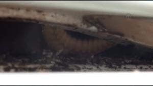 Buzdolabına Giren Yılanı Çıkarmak İçin Yetkili Servisi Çağırdı