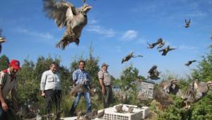 Doğaya Bin 500 Kınalı Keklik Salındı