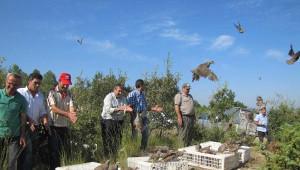 Kütahya'da 1500 Kınalı Keklik Doğaya Salındı