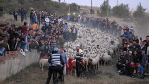 Çobanların Sürüleri Üzerindeki Hakimiyeti Yarışması