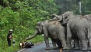 Fillerin Motosiklet Sürücüsüyle Amansız Mücadelesi
