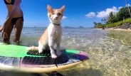 Sörf Aşığı, Tek Gözlü Kedi Kuli