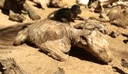 İsrail'in Saldırıları Hayvanları da Canından Etti